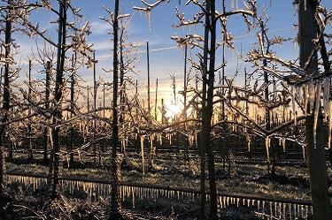 Frost, Beregnung, Frostschutzberegnung, Beregnungsnacht, Altes Land