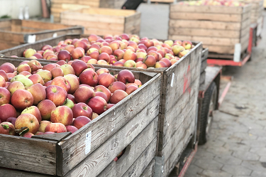 Apfel, Äpfel, Apfelernte, Erntewagen